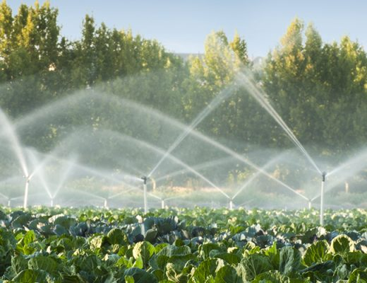 Reminder: Irrigation workshop coming up for SA growers