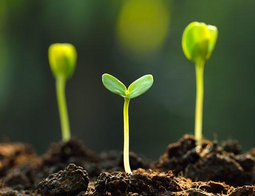Omnia renews partnership with AUSVEG to support Australian growers