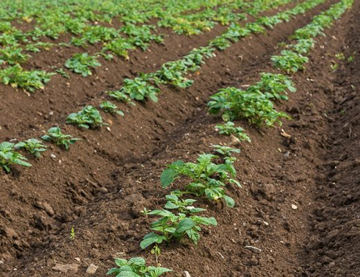 Victoria: Agriculture Victoria publishes PCN Industry Notice