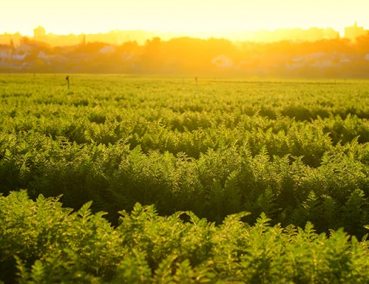 Last chance to register for vegetablesWA Industry Summit