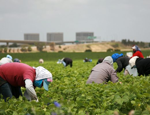 Australian vegetable industry strongly condemns mistreatment of workers