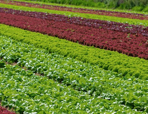 Fresh salad producer group launches food safety standard for fertiliser and soil additive use