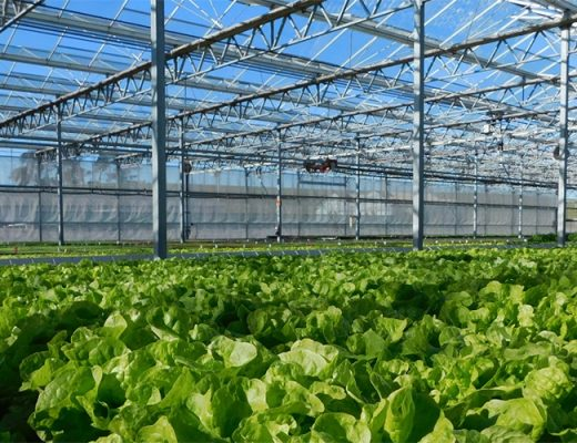 Save the date for PCA's greenhouse grower tour in Tasmania next year