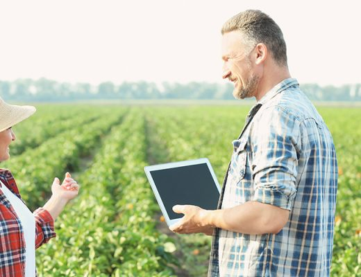 Consultation – Harvest Labour Services and the National Harvest Labour Information Service