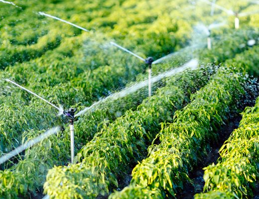Levy-funded research yields data-driven irrigation insights