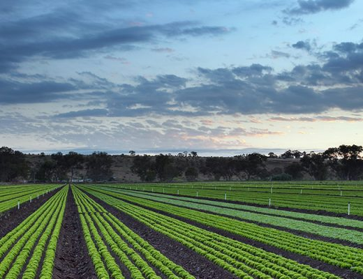 ABARES Weekly Australian climate, water and agricultural update