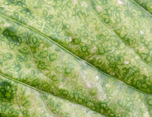 Project looks at early plant disease detection using hyperspectral imaging