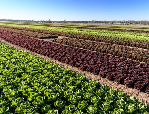 AUSVEG advocacy activities – Agriculture Industry roundtable