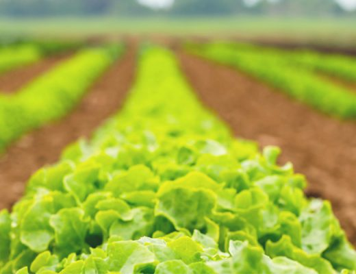 AUSVEG calls on major parties to review policies with negative impact on horticulture