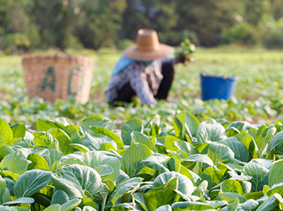 Horticulture Industry Labour Agreement to help growers find skilled and semi-skilled workers