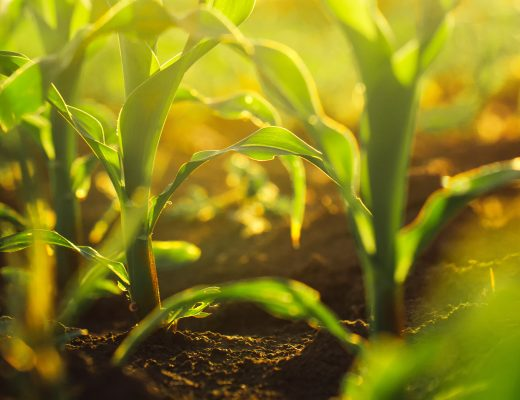 Videos: Lessons from continued innovation in weed management