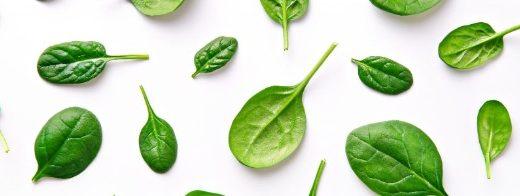 EGVID 2020   Seminis – spinach