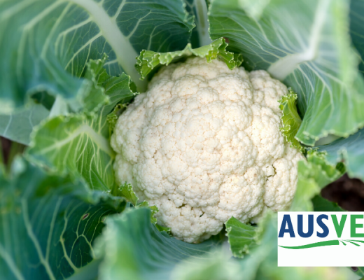 Sustainable success stories showcase efforts of SA growers to adopt new practices