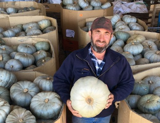 Podcast: Cover crops and strip till for pumpkin production