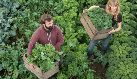 EY report demonstrates 26,000 worker shortage that will cripple fruit and vegetable industries