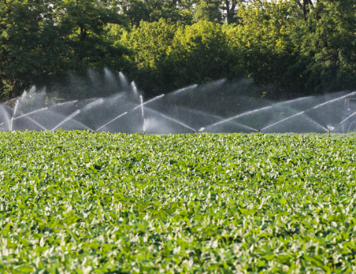 Case study:Irrigation monitoring is out of this world at Bathurst