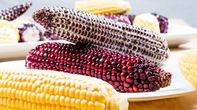 Purple Sweet Corn Naturally Nutritious Ausveg