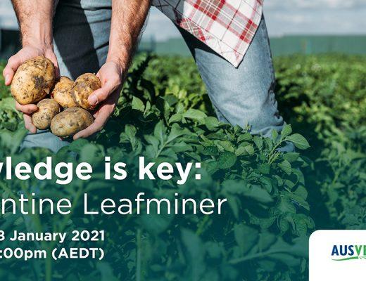 Knowledge is key: Serpentine leafminer webinar
