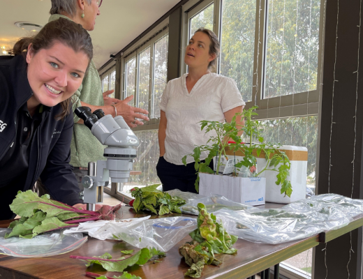 Pest and disease management in focus at SA workshop