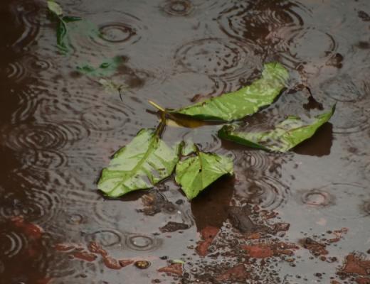 Update on cyclone Seroja, WA