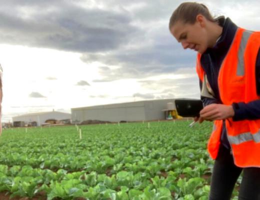 Werribee South virtual farm walk on managing saline-sodic soils