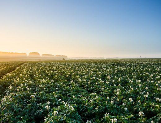 Salinity & potato production: Using organic soil amendments, biologicals & biostimulants