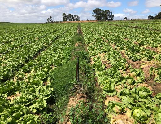 Offering disease control and value to vegetable growers