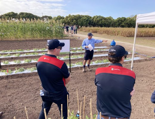 Bowen GrowMore Field Day hailed a success