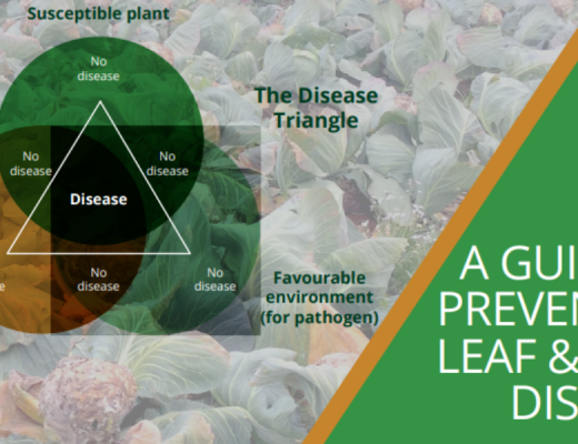 A guide to preventing leaf and stem diseases
