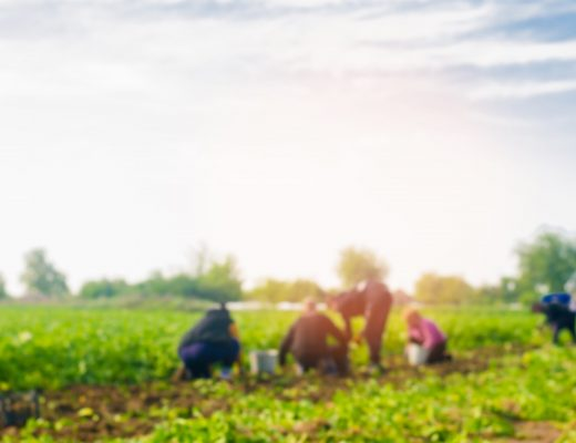 Labour mobility program reforms to reduce red tape for growers to access critical farm workers