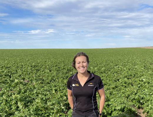 Potatoes Australia / PotatoLink Spring 2021