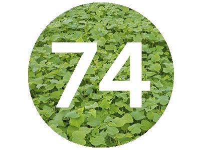 Vegenotes #74